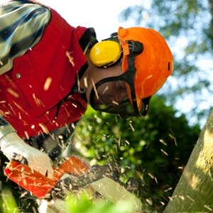 Chainsaw Operator with Safety Equipment