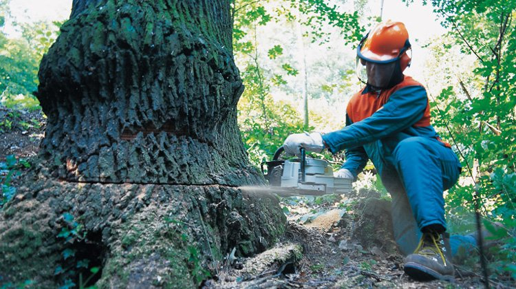 Stihl MS Chainsaw action image